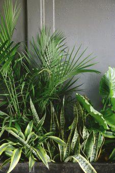 Na co zwrócić uwagę przed aranżacją ogrodu?
